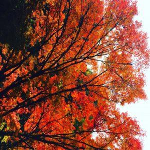 秋の素敵な思い出